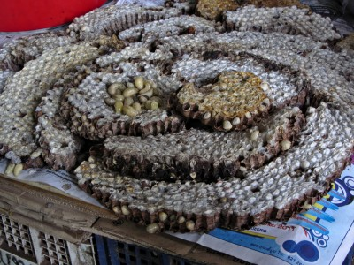 Asian giant hornet nest 2012-07-30