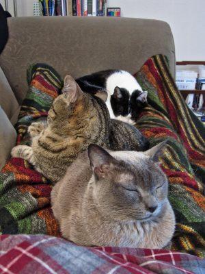 Nap time (Suki, Frank, and Spike) 2015-01-04