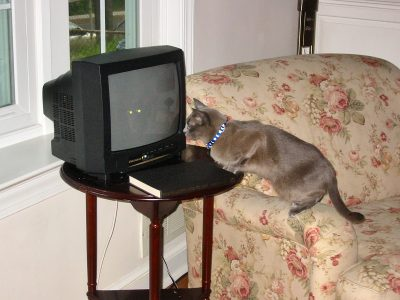 Suki watches the room 2005-06-02